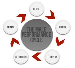 Male Cycle